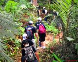 Jungle Trekking Tour Packages
