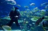 Diving Tour Packages